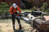 Full Tree Service  Stump Removal
