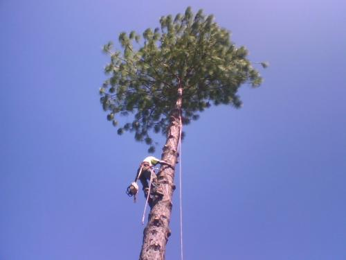 Theo's Tree Lopping & Coconut Removal - Click Find