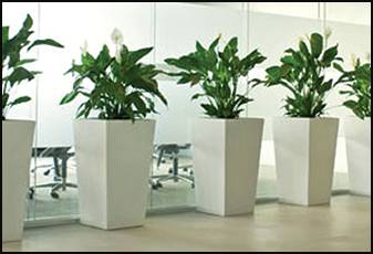 Living Green Indoor Plant Hire
