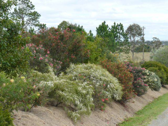 Sunshine Coast Native Landscapes
