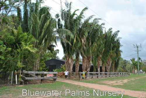 Bluewater Palms
